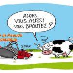 Le trésor Public du Maroc : La vache à lait des Pseudo- Associations MRE