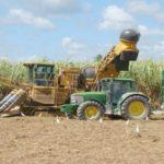 Cosumar leader Marocain du sucre construira une raffinerie de la canne à sucre au Cameroun